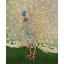 Papier peint panoramique Peacock